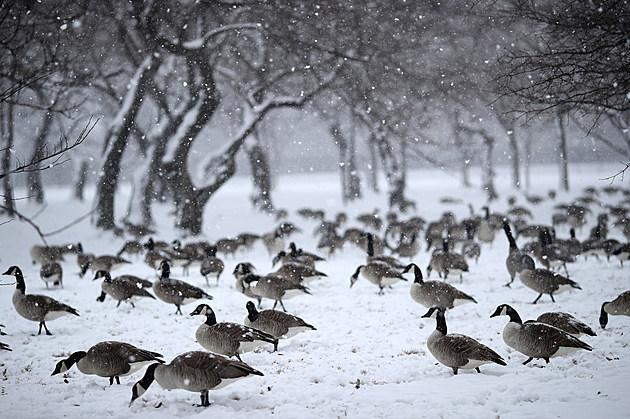 Wintery Mix Of Snow, Ice, And Rain Falls In Washington D.C. Area